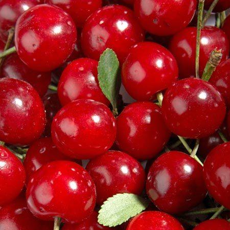 Cerisier Griotella®