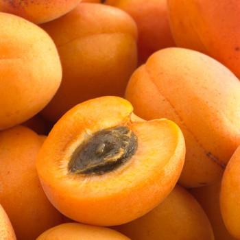 Abricotier Rustique des Pyrénées® Agriculture Biologique