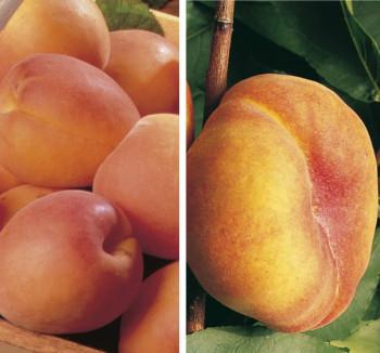 Collection Les fruits d´été
