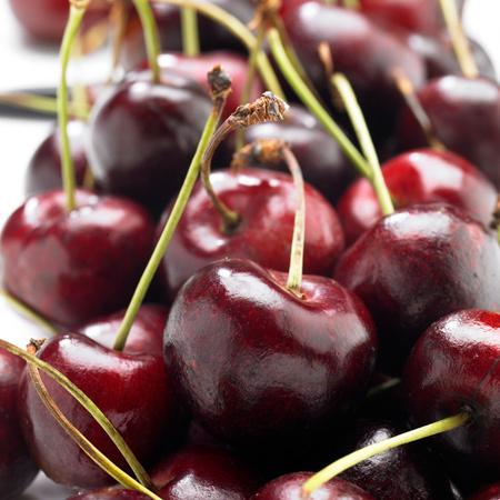Cerisier Bigarreau Délice de Malicorne® Agriculture Biologique