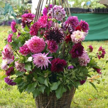 Fleurs à bouquets