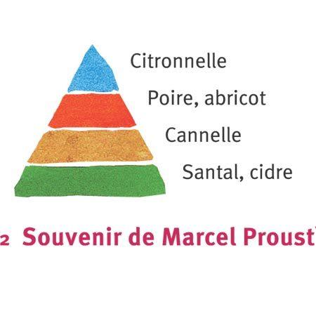 Rosier Souvenir de Marcel Proust®