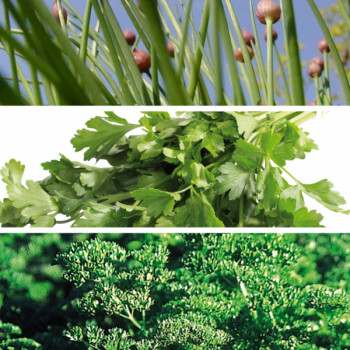 Collection Les Fines Herbes
