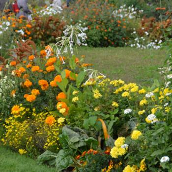 Jardin jaune