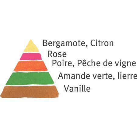 Rosier Claude Monet® Le rosier Tige