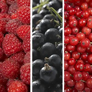 Collection Les Petits Fruits