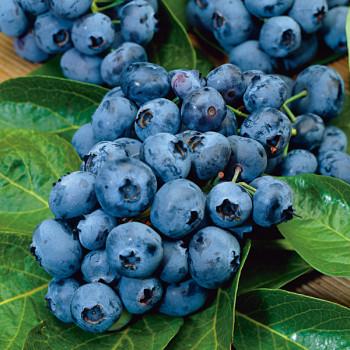 Myrtille Blue Pearl®