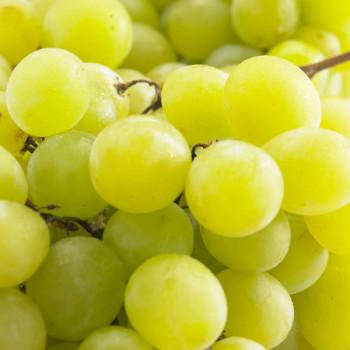 Vigne Perlette