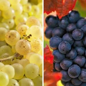 Collection Vignes Classiques