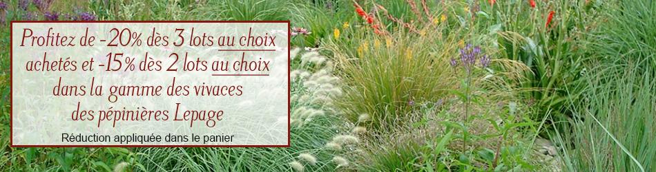 Plantes vivaces pour rocailles : achat et vente vivaces jardin de ...