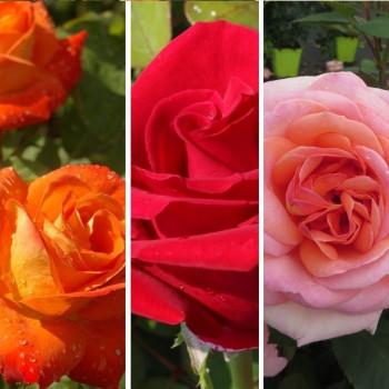 Collection Spéciale Bouquets