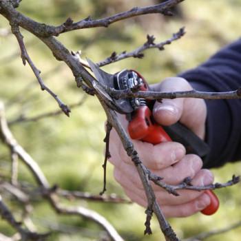 Formation Taille Arbres Fruitiers et Rosiers - 1 journée à Malicorne