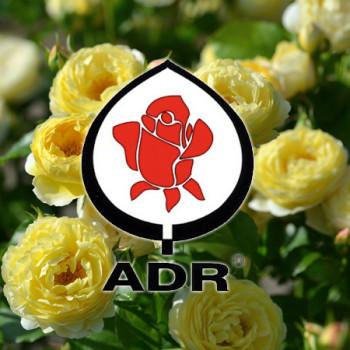 Rosiers ayant obtenu l'ADR