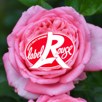 Rosiers Label Rouge